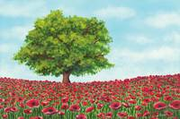 Poppies Spring Landscape