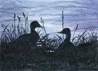 Ducks Silhouetted