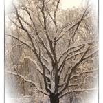 """""""WINTER ARMS"""" by shaynaphotography"""