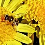 Honey Im Home