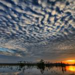 """Orlando Wetlands HDR web"" by scott2403"
