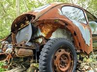 Rusty and Crusty Bug (1 of 1)