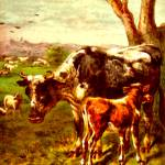 """Cow and calf"" by bandtdigitaldesigns"