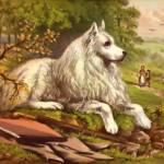 """""""White dog"""" by bandtdigitaldesigns"""