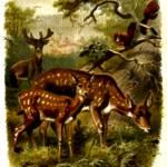 """""""Deer family"""" by bandtdigitaldesigns"""