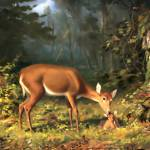 """Maternal deer"" by bandtdigitaldesigns"