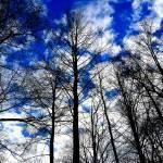 """Through the Tree Tops"" by TaraEllisPhotography"