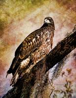 Young Eagle Pose II