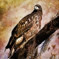 """Young Eagle Pose II"" by DBenoit"