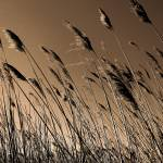 """The Salt Marsh"" by jeffwatts"