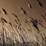 """The Salt Marsh"" by jeffwatts"
