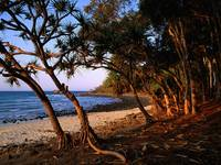 Tea Tree Beach, Noosa National Park, Queensland, A