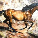 """Brumby"" by Kevinmeredith"