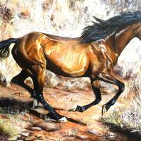 Brumby Art Prints & Posters by Kevin Meredith