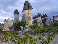 Grapevines and Fairy Chimneys, Cappadocia, Turkey