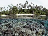 Coral Reef, Solomon Islands
