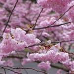 """Spring Pink Blossom Flowers Tree art prints"" by BasleeTroutman"
