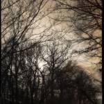 """""""Low Winter Sun (00529J)"""" by Fotofrieze"""