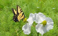 Wild Marsh Flower and Butterfly
