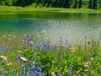 Nature For All - Mount Rainier National Park
