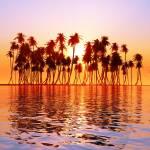 """sun over coconut palms"" by Alekcej"