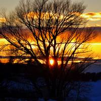 Sunset Through The Trees by Lisa Rich