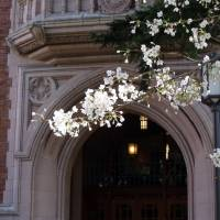 Cherry Blossoms over Campus Doorway, Spring 2013 Art Prints & Posters by Karen Olsen
