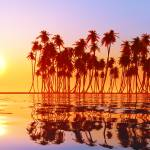 """coconut palms at sunset"" by Alekcej"