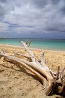 Tropical Beach Driftwood