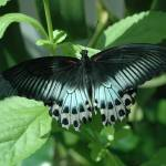 """key west butterfly"" by photographybyccr"
