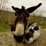 """""""donkeyCAT"""" by MAIZ_YAMAN"""