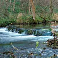 Woodland Weir, Dovedale (39821-RDA) Art Prints & Posters by Rod Johnson