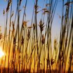"""""""dry cane"""" by Alekcej"""