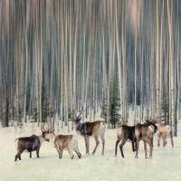 caribou and trees