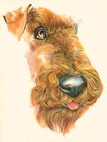 Jeff the Airedale
