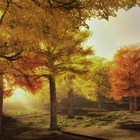 New Autumn Sunrise Art Prints & Posters by Rick Wooten