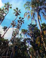 Palm Canyon San Diego by RD Riccoboni