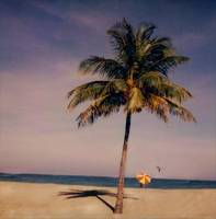 Palm with Red and Yellow Umbrella, Hollywood Beach by Joe Gemignani