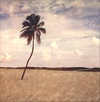 Lone Palm- Miami Beach,FL by Joe Gemignani