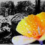 """Garden Scenes"" by frankreggio"