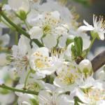"""""""Blossom"""