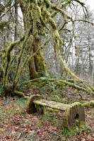 The Mossy Bench