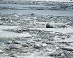 Ice on the Hudson River by Kristen Fox