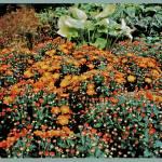 """""""Garden scapes"""" by frankreggio"""