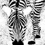 """Black or White Striped Zebra"" by BarbaraPelizzoli"
