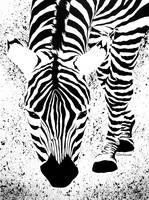Black or White Striped Zebra