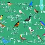 """Birds of North America"" by joylaforme"
