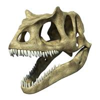 3D rendering of an Allosaurus skull