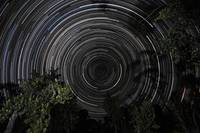 Southern Sky star trails over Banksia Trees