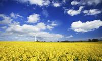 Wind turbine in a canola field against cloudy sky,